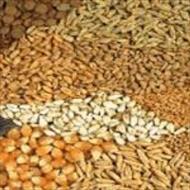 پاورپوینت کاربرد و استفاده از انواع مکمل ها در جیره غذایی دام